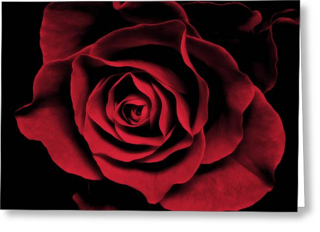 Square Print Greeting Cards - Abstract Red Rose Flower Art Work Photograph Greeting Card by Artecco Fine Art Photography