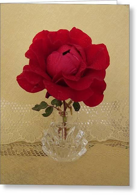 red rose III Greeting Card by Zina Stromberg