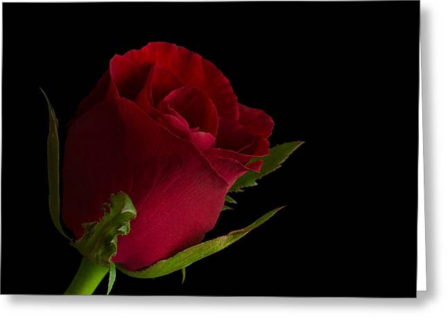 Close Focus Floral Greeting Cards - Red Rose in black Greeting Card by Woranan Thongkaemkaeo