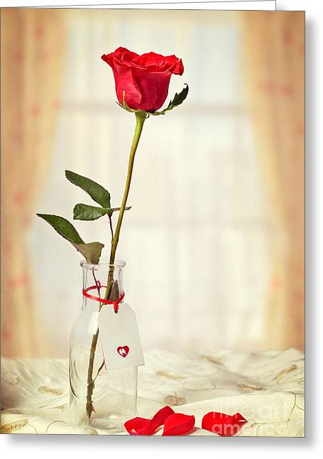 Bird Bottle Greeting Cards - Red Rose In Bottle Greeting Card by Amanda And Christopher Elwell
