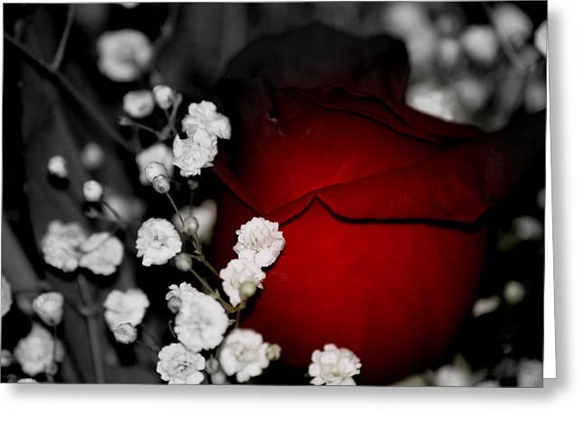 Photographs With Red. Photographs Greeting Cards - Red Rose in shadows Greeting Card by Laurie Pike