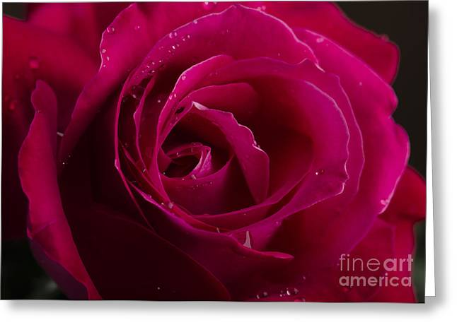 Purple Pyrography Greeting Cards - Red Rose Greeting Card by Jelena Jovanovic