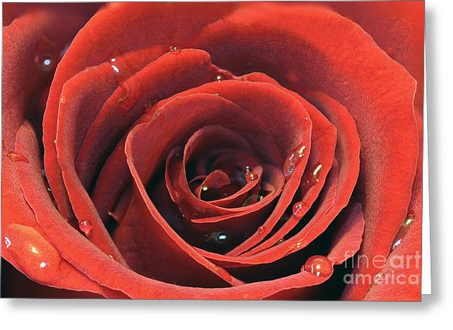 Valentines Day Greeting Cards - Red Rose Greeting Card by Lars Ruecker