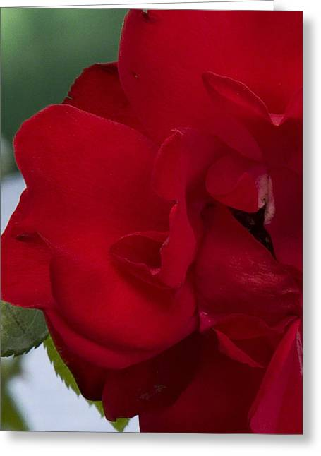 Red Rose Greeting Card by Michael Friedman