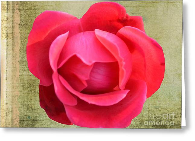 Centifolia Greeting Cards - Red Rose of Love Greeting Card by Luther   Fine Art