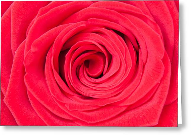 Rose Petal Heart Greeting Cards - Red Rose Greeting Card by Semmick Photo