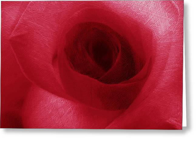 Interior Decorating Drawings Greeting Cards - Red Rose Greeting Card by Tony Rubino