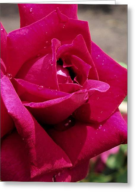 Photographs With Red. Greeting Cards - Red Rose Up Close Greeting Card by Thomas Woolworth