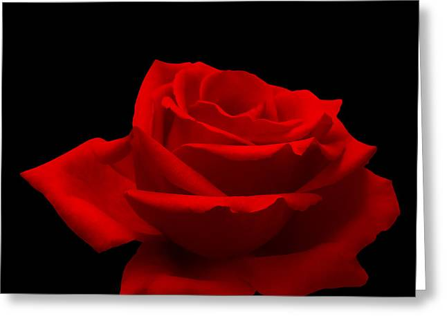 Celebrate Photographs Greeting Cards - Red Rose on Black Greeting Card by Wim Lanclus