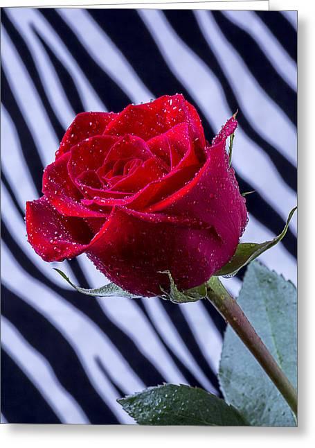Kale Greeting Cards - Red Rose With Stripes Greeting Card by Garry Gay
