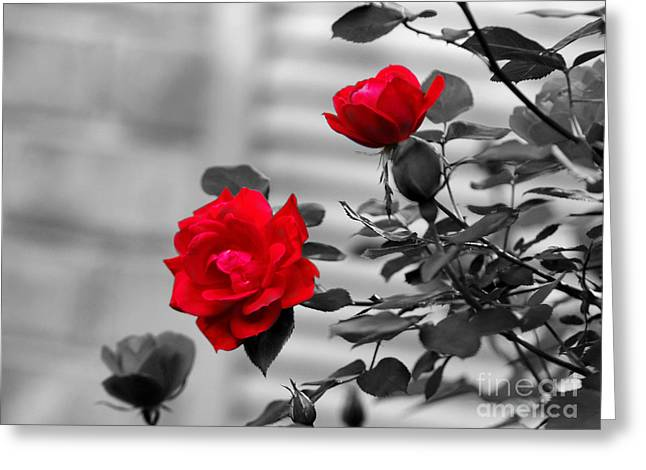 Red Black And White Greeting Cards - Red Roses Greeting Card by Jai Johnson