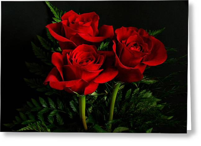 Red Roses Greeting Card by Sandy Keeton