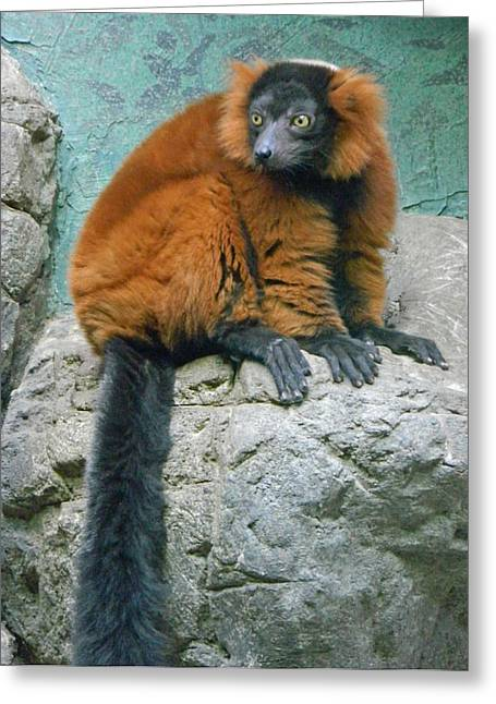Red-ruffed Lemur Greeting Cards - Red Ruffed Lemur Greeting Card by Emmy Marie Vickers
