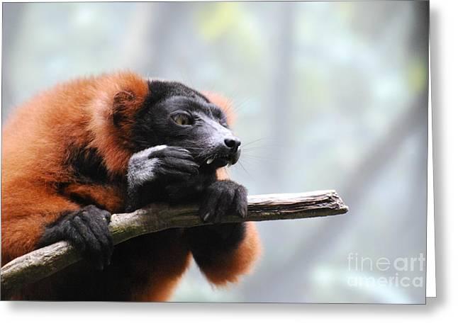 Red-ruffed Lemur Greeting Cards - Red Ruffled Lemur with Sharp Fangs Greeting Card by DejaVu Designs