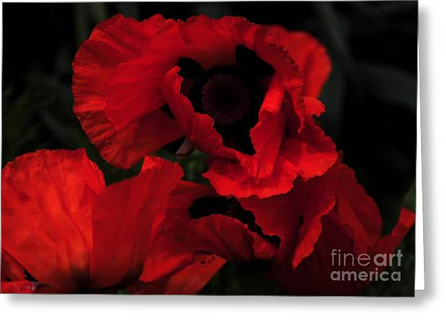 Struckle Greeting Cards - Red Ruffles Greeting Card by Kathleen Struckle