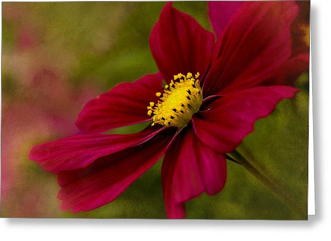 Close Focus Floral Greeting Cards - Red Sensation Greeting Card by Mary Jo Allen