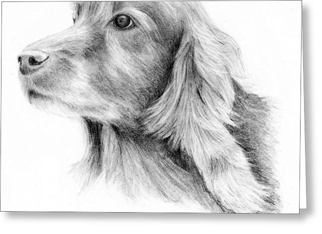 Mary Mayes Greeting Cards - Red Setter Greeting Card by Mary Mayes