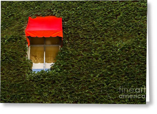 Window Shade Greeting Cards - Red Shade Greeting Card by Tim Wilson