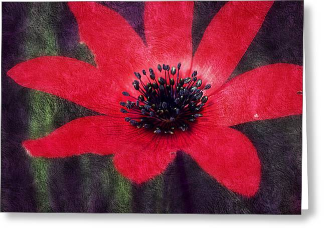 Pinks And Purple Petals Photographs Greeting Cards - Red Shimmers Greeting Card by Melanie Lankford Photography