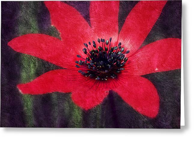 Pinks And Purple Petals Greeting Cards - Red Shimmers Greeting Card by Melanie Lankford Photography