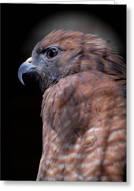 Red Shouldered Hawk 295 Greeting Card by Joyce StJames
