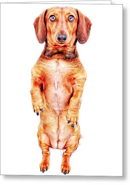 Hounddog Greeting Cards - Red Sitting Pretty  Greeting Card by Johnny Ortez-Tibbels