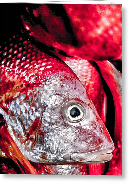 Red Snapper Greeting Cards - Red Snapper Greeting Card by Jim DeLillo