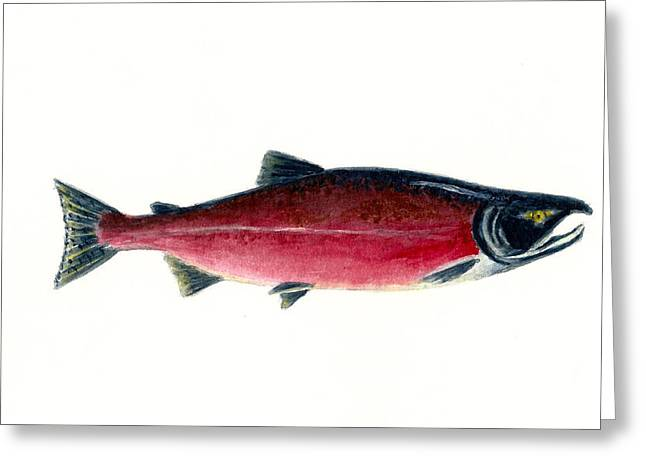 Salmon Paintings Greeting Cards - Red Sockeye Salmon Greeting Card by Michael Vigliotti