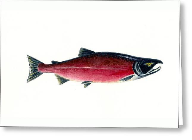 Sockeye Paintings Greeting Cards - Red Sockeye Salmon Greeting Card by Michael Vigliotti