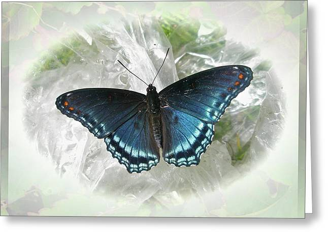 Mother Nature Greeting Cards - Red-Spotted Purple Butterfly - Limenitis arthemis Greeting Card by Mother Nature