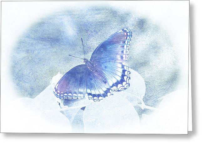Antenna Mixed Media Greeting Cards - Red Spotted Purple Butterfly - Pastel Greeting Card by Gena Weiser