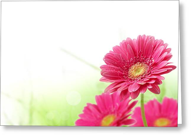 Red spring flowers Greeting Card by Boon Mee