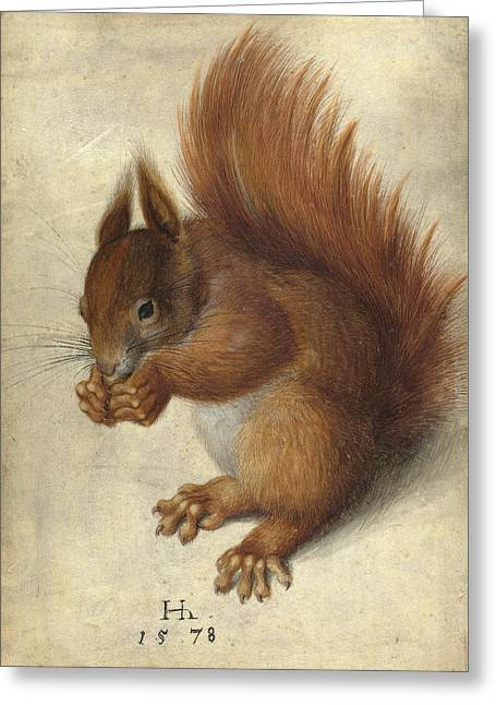 Squirrel Drawings Greeting Cards - Red Squirrel  Greeting Card by Hans Hoffmann