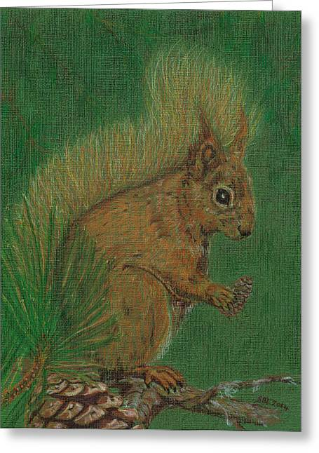 Pine Needles Drawings Greeting Cards - Red Squirrel Greeting Card by Stephanie Grant
