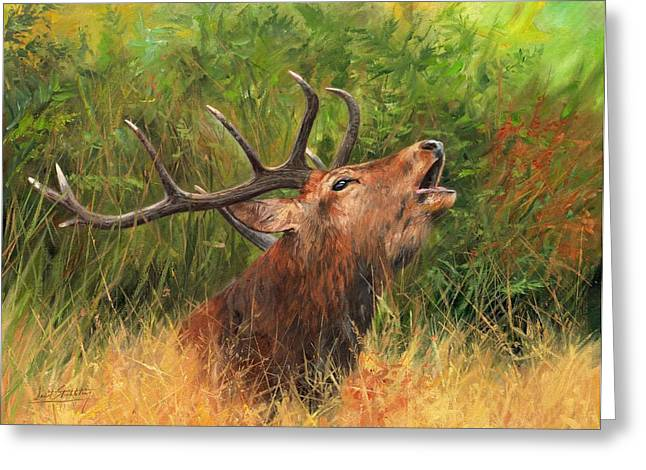 Stag Greeting Cards - Red Stag Greeting Card by David Stribbling