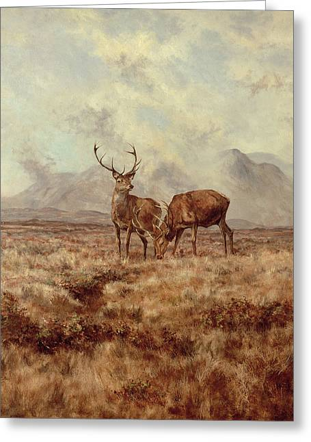 Red Stags, Ben Buie Greeting Card by Tim Scott Bolton