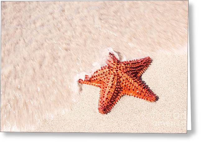 Starfish Posters Greeting Cards - Red starfish on tropical beach in the Caribbean Greeting Card by Matteo Colombo