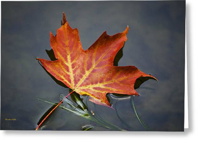 Tree Leaf On Water Greeting Cards - Red Sugar Maple Leaf Greeting Card by Christina Rollo