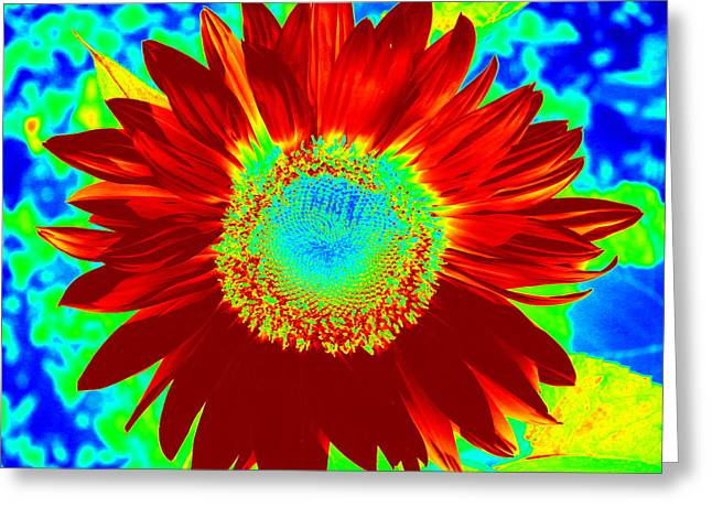 Thermal Red Sunflower Greeting Card by Online Presents