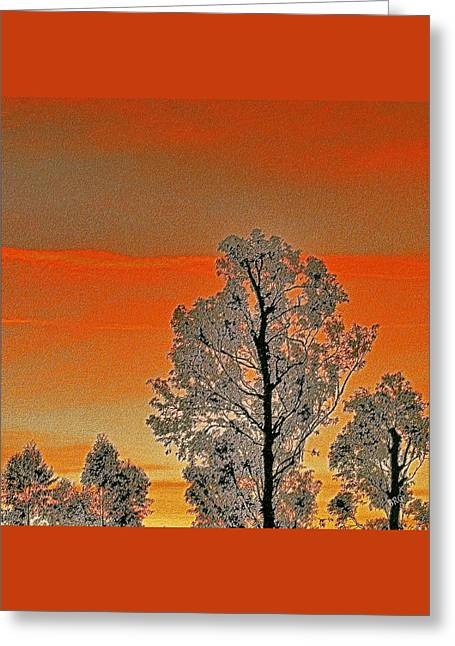 Red Sunset With Trees Greeting Card by Ben and Raisa Gertsberg