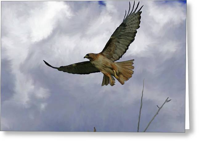 Redtail Hawks Greeting Cards - Red Tail Hawk Digital Freehand Painting 1 Greeting Card by Ernie Echols