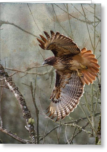 Hawk In Flight Greeting Cards - Red-Tail Hawk in Flight Greeting Card by Angie Vogel