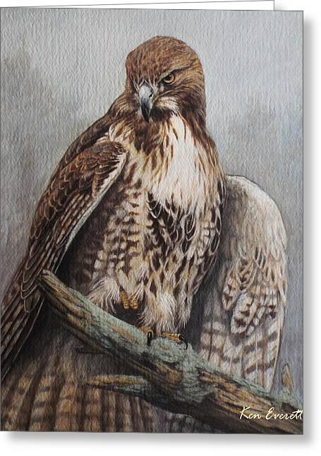 Red Art Greeting Cards - Red Tail Hawk Greeting Card by Ken Everett