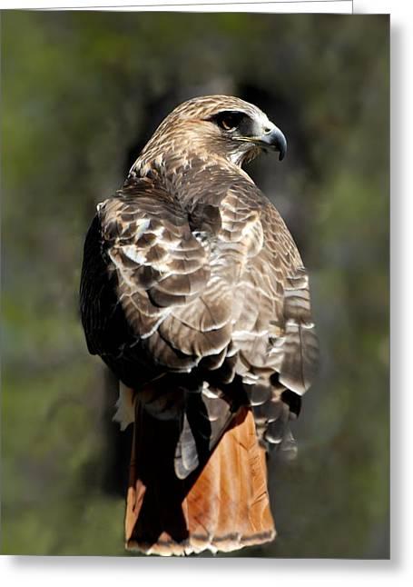 Red Tailed Hawk 289 Greeting Card by Joyce StJames