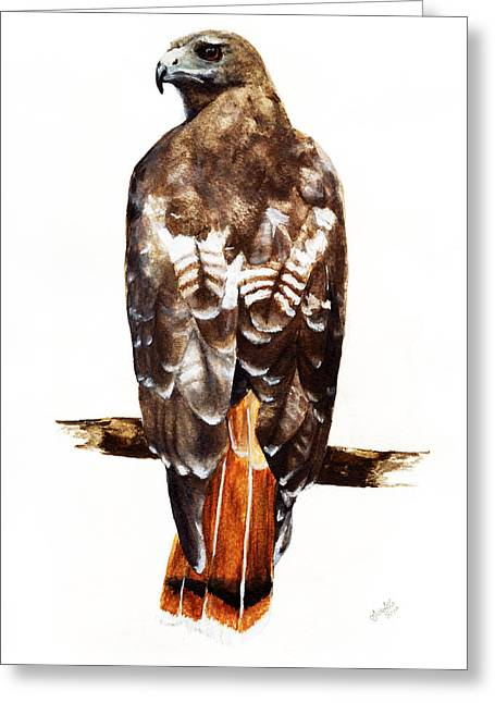 Red Tailed Hawk Greeting Card by Carlo Ghirardelli