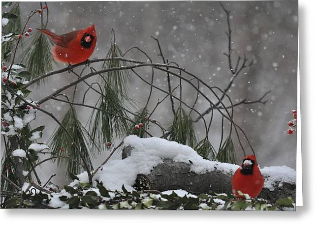 Two Birds Greeting Cards - Red times two Greeting Card by Deborah Bifulco