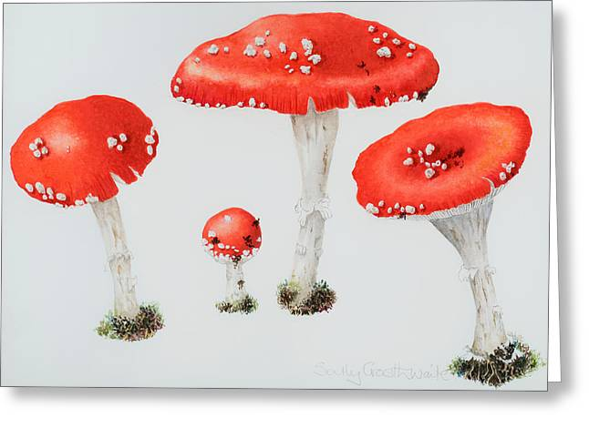 Fungi Greeting Cards - Red Toadstools Fly Agaric  Greeting Card by Sally Crosthwaite