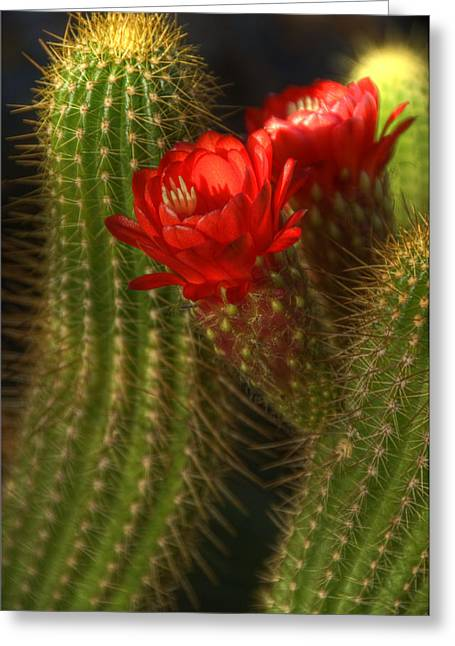 Torch Cactus Greeting Cards - Red Torch II  Greeting Card by Saija  Lehtonen