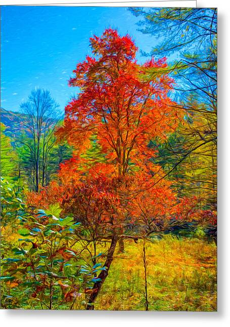 Scenic Drive Greeting Cards - Red Tree Greeting Card by John Bailey