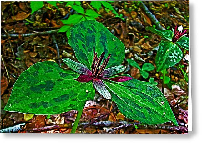 Natchez Trace Parkway Greeting Cards - Red Trillium in Donivan Slough at Mile 283 of Natchez Trace Parkway-Mississippi  Greeting Card by Ruth Hager